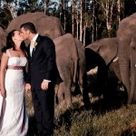 Real Wedding at Knysna Elephant Park {Caroline & Keith}