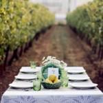 An Autumn Vineyard