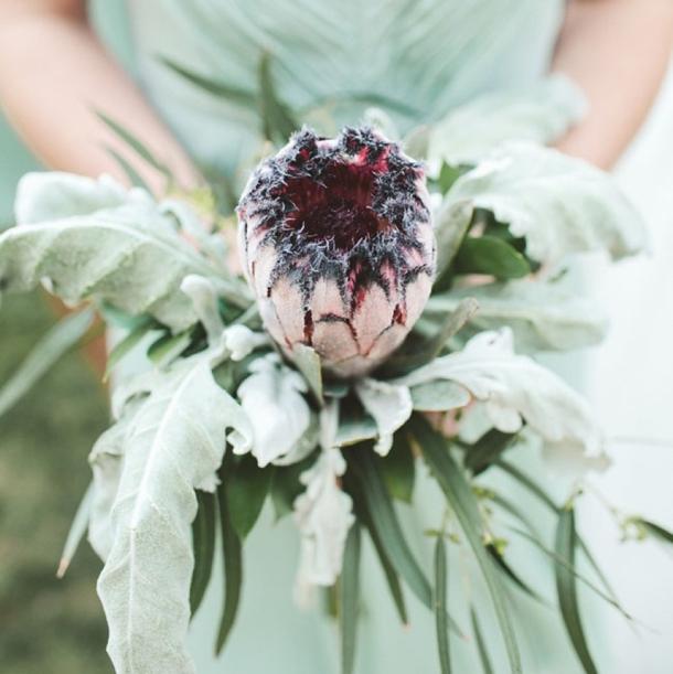 25 Protea Bouquets