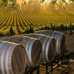 Honeymoons for Wine Lovers