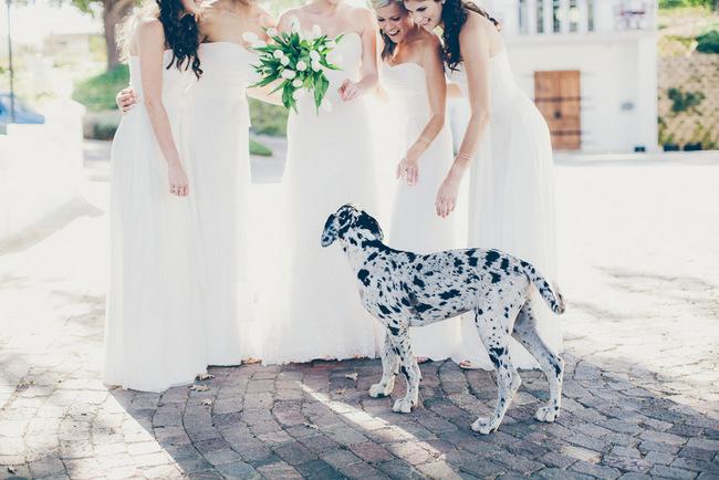 Dalmation at Black and White Wedding