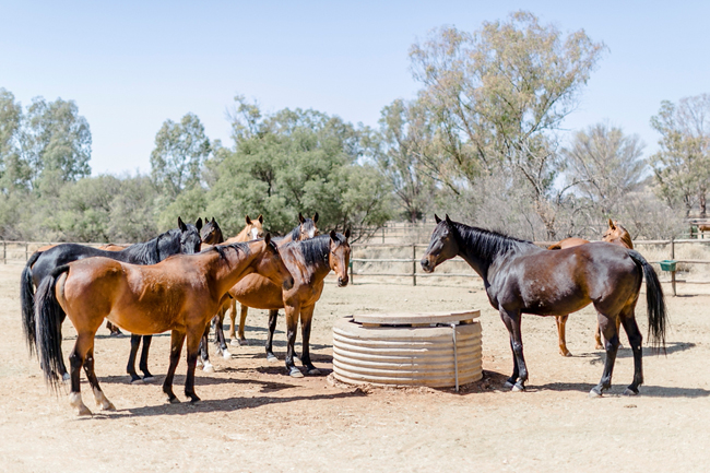 Equestrian Themed Wedding By Christine Joy Southbound Bride