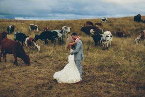 Nguni Cows Wedding Portrait | Credit: Knot Just Pics