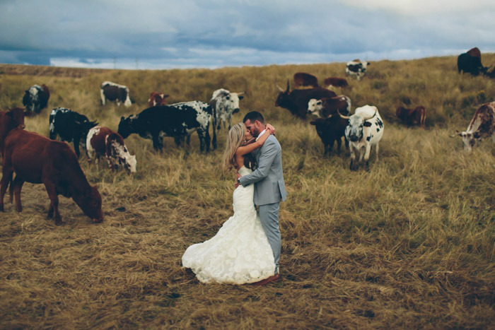 Nguni Cows Wedding Portrait | Credit: Knot Just Pics