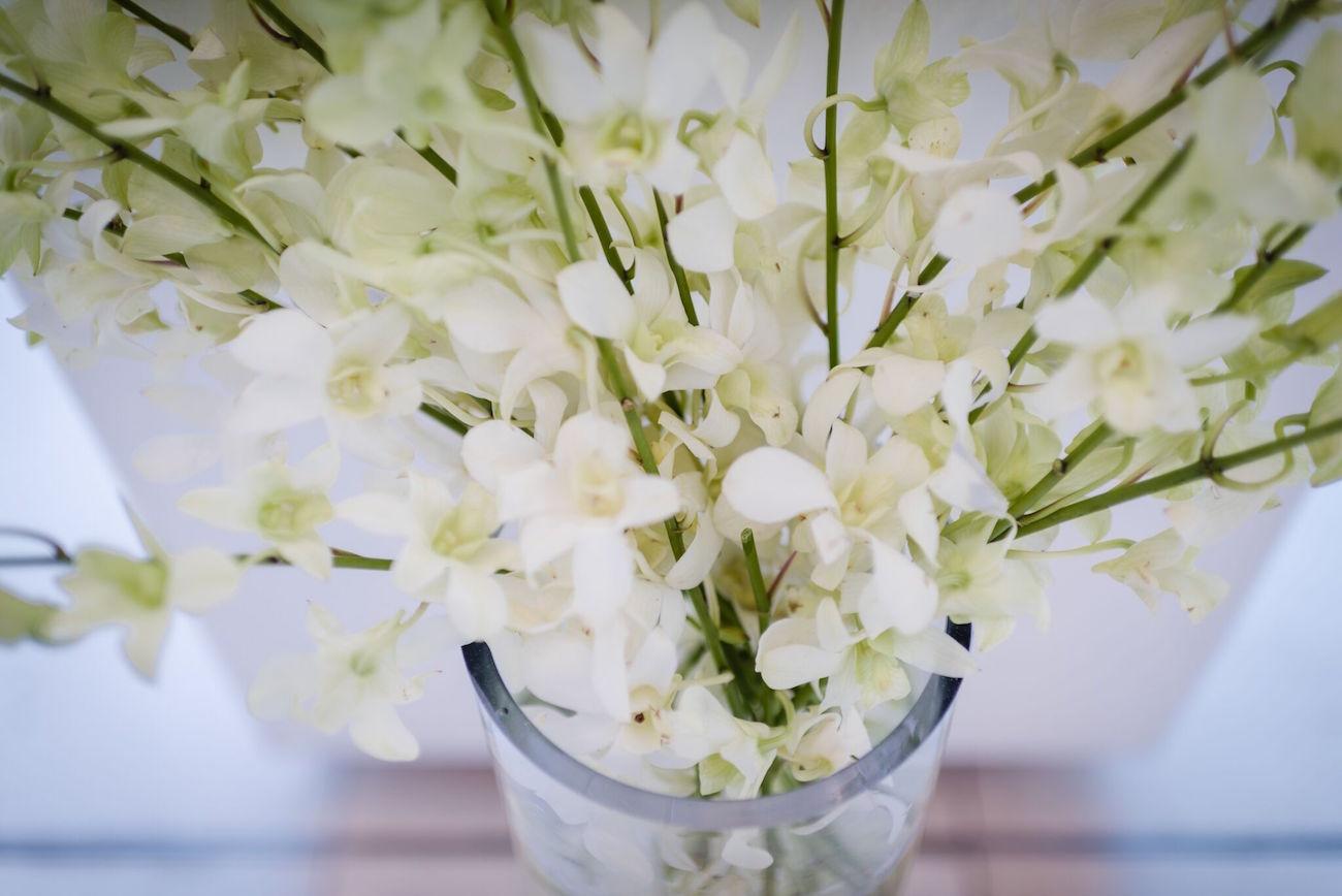 White Orchid | Image: Wynand van der Merwe