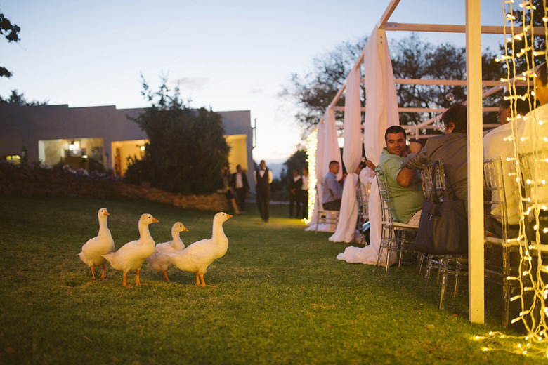Geese at Farm Wedding | Image: Moira West
