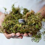 Beauty & the Beast Organic Wedding Inspiration